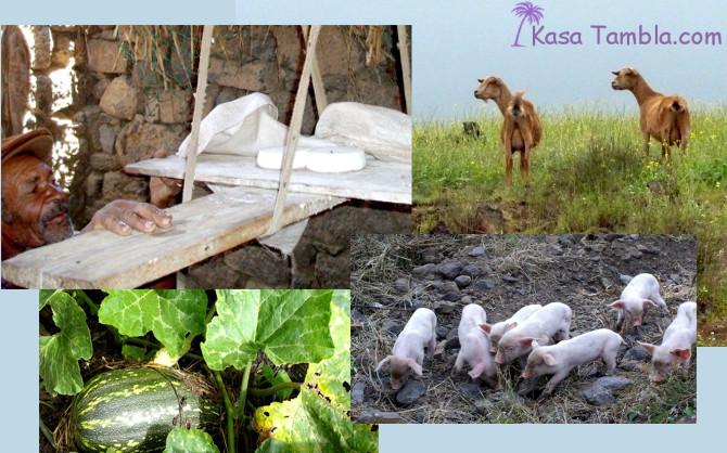 Les produits de l'agriculture