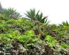Santo Antão - Biotopes Endemiques