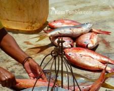 Santo Antao - Ponta do Sol - Vente des poissons